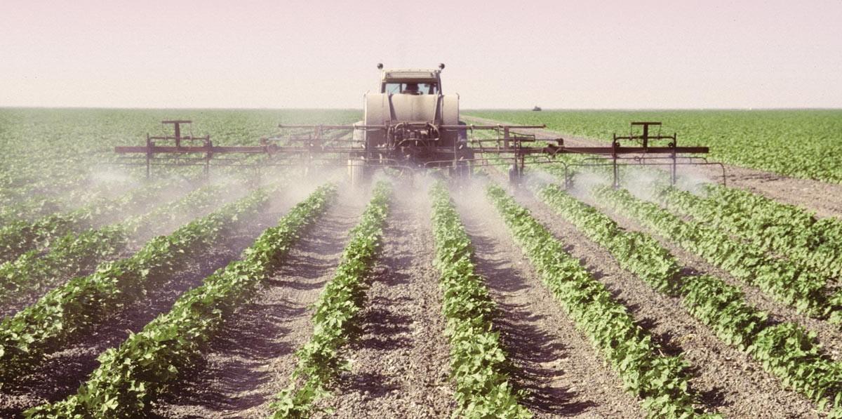 Cotton Spraying