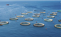fish farming in south australia