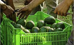 Australia's leading agriculture recruitment agency labour service provider
