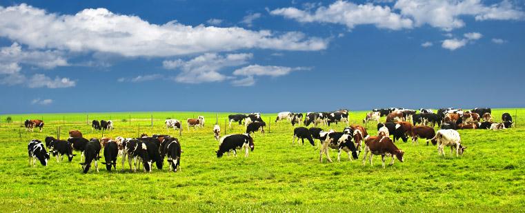 Dairy jobs in Australia