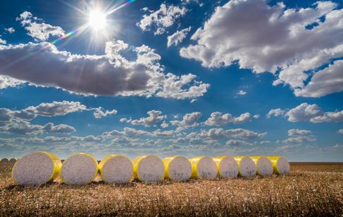 Cotton ginning jobs