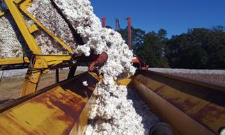 Cotton Australia | Australian Cotton